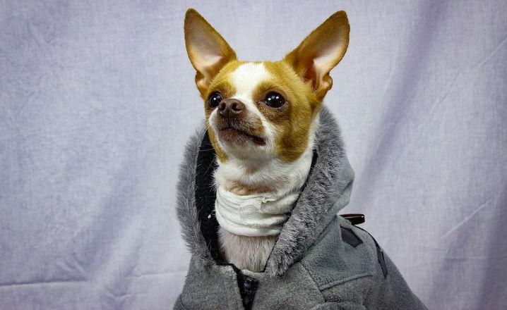 Ropa invernal para perros
