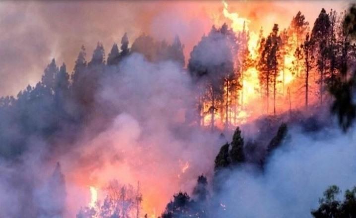 El mundo muestra su preocupación por el creciente número de incendios en el Amazonas